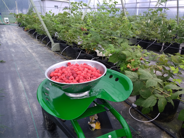 Harvesting with a back-saving device