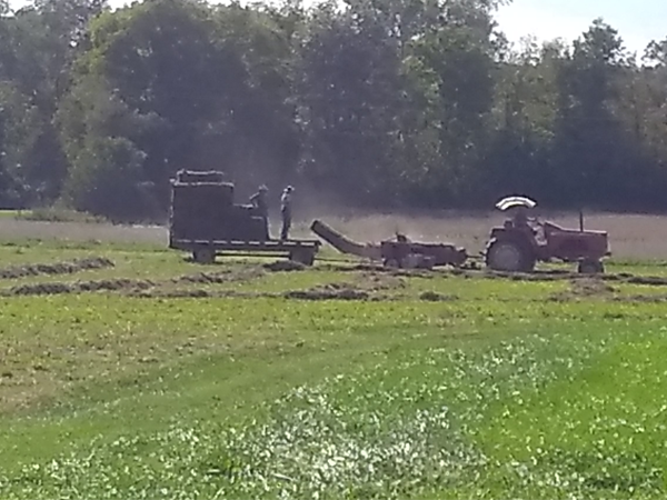 Hay making, September 2018